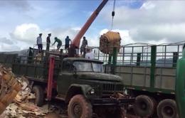 Bộ đội biên phòng Quảng Trị bắt lượng lớn gỗ lậu