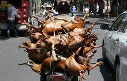 Hà Nội: Tuyên truyền để người dân bỏ thói quen ăn thịt chó, mèo