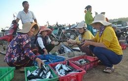 Đi chợ cá trên đảo Lý Sơn