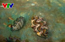 Bình Thuận: Thả động vật thủy sinh quý hiếm về với môi trường biển