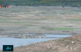 Tình hình khô hạn ở Ninh Thuận là bất thường và nghiêm trọng