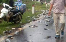 Lật xe tải chở cá, người dân đến mua ủng hộ tài xế