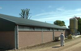 Phát hiện virus dịch tả lợn châu Phi tại Bỉ