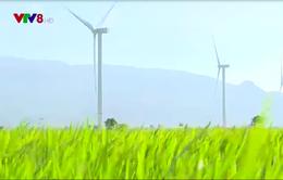 Ninh Thuận xử lý các dự án điện gió chậm tiến độ