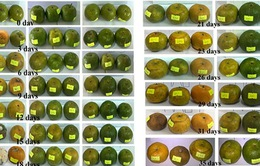 Ứng dụng nano bạc trong sản xuất chế phẩm màng bảo quản rau quả tươi