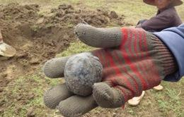 Phú Yên: Kiểm tra tình trạng khai thác đá đen ở Sông Hinh