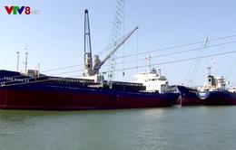 Thanh tra chính phủ công bố sai phạm Công ty cổ phần Cảng Quy Nhơn