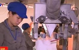 Sẽ bán Nhà máy giấy Phương Nam để thu hồi vốn
