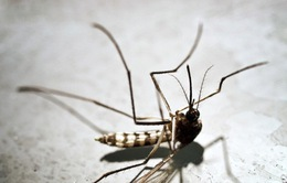Công nghệ mới chống lại muỗi gây bệnh