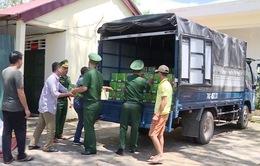 Quảng Trị phát hiện vụ buôn lậu bia với số lượng lớn
