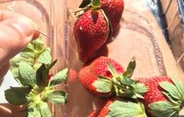 Vụ găm kim khâu vào hoa quả tại Australia: Nghi phạm đầu tiên bị bắt giữ