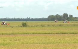 ĐBSCL đẩy nhanh tiến độ thu hoạch lúa chạy lũ