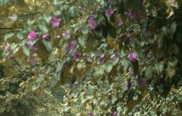"""Đà Lạt đẹp xao lòng trong bộ phim """"Trang trại hoa hồng"""""""