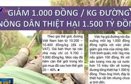 Lối đi nào cho ngành mía đường Việt Nam?