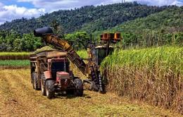 Australia phát triển ngành mía đường theo cách nào?