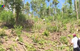 Khám nghiệm hiện trường vụ phá rừng phòng hộ ở Ea Kar