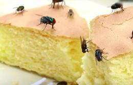 Hiểm họa từ việc ruồi đậu vào thức ăn