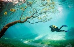 Choáng ngợp với những bức ảnh đẹp mê hồn chụp dưới nước