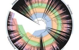 """Các nhà khoa học """"sửa"""" cây đời của vi khuẩn"""