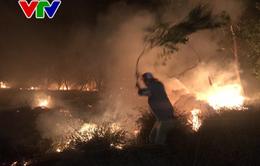 Cháy hàng trăm héc-ta rừng phòng hộ ven biển Quảng Bình