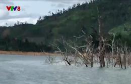 Quảng Nam: Lộ diện những cánh rừng chết dưới lòng hồ thủy điện