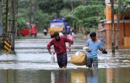 Ấn Độ: Bệnh dịch hoành hành tại bang Kerala sau lũ lụt