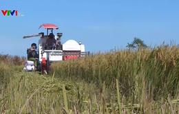 Bức tranh nông nghiệp, nông thôn đã có nhiều chuyển biến tích cực