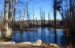 Những khu rừng ma ám nổi tiếng thế giới