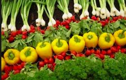 Nâng giá trị rau từ màu sắc