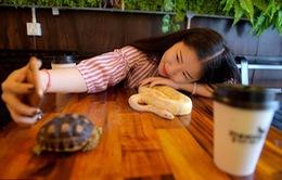 Đến quán cafe cảm giác mạnh: Chơi cùng rắn, bọ cạp và cự đà