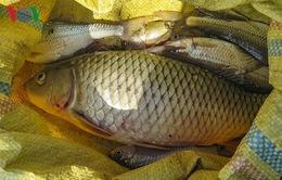 Cá chết nhiều trên suối Nậm Núa