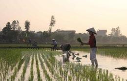70% diện tích gieo cấy vụ Đông Xuân đã có nước