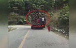 Thót tim với clip trẻ em liều lĩnh đu bám xe tải để trộm mía
