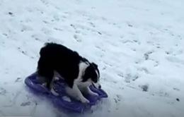 Video chú chó ngộ nghĩnh tự trượt tuyết