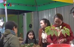 Phiên chợ sâm Ngọc Linh thu hút nhiều du khách quốc tế