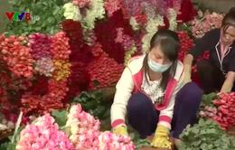 Tháo gỡ điểm nghẽn trong xuất khẩu hoa Đà Lạt