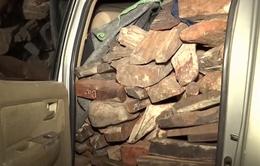 Quảng Trị: Bắt xe chở 2 tấn gỗ trắc không rõ nguồn gốc