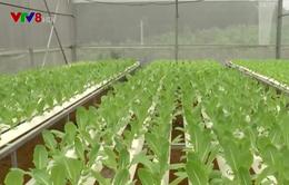 Đà Nẵng đẩy mạnh phát triển nông nghiệp công nghệ cao