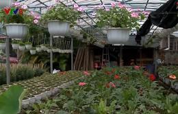 Quảng Trị: Làng hoa An Lạc vào vụ Tết