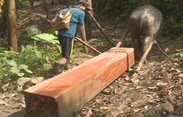 Rừng Quảng Nam tiếp tục bị tàn phá
