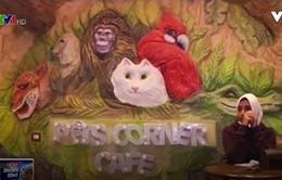 Pet Corner - Quán cafe dành cho thú cưng tại Ai Cập