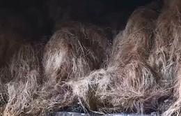 Vũng Tàu: Giải độc ô nhiễm khí thải bằng xơ dừa