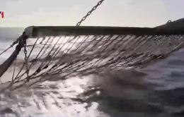 Tranh cãi xung quanh lệnh cấm đánh bắt cá bằng xung điện của Nghị viện châu Âu