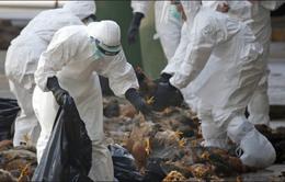 Trung Quốc giám sát chặt chẽ dịch cúm