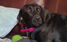 Cả nhà thoát khỏi đám cháy nhờ chú chó thông minh