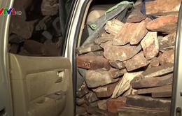 Bắt vụ vận chuyển 2 tấn gỗ trắc trái phép
