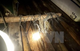 Quảng Nam: Phát hiện vụ vận chuyển khối lượng lớn gỗ trái phép
