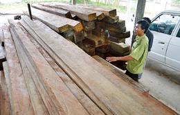 Phát hiện kho trữ gỗ lậu số lượng lớn tại TT-Huế