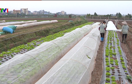 Hưng Yên đẩy mạnh chuỗi thực phẩm an toàn