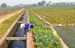 Biết nước ô nhiễm vẫn phải dùng để canh tác nông nghiệp ngay giữa Hà Nội